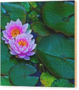 Pink Water Lilies - Lotus Wood Print