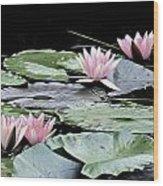 Pink Water Lilies Painting Wood Print
