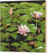 Pink Water Lilies Soft Focus Wood Print