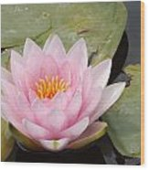 Pink Water Lily And Leaves Wood Print