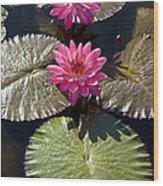 Pink Water Lily IIi Wood Print