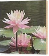 Pink Waterlilies Wood Print