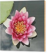 Pink Waterlily And Cloud Reflection Wood Print