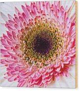 Pink White Daisy Wood Print