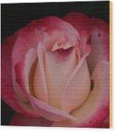 Pink White Rose Wood Print