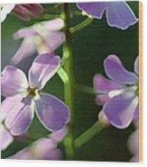Pink Wildflwer Wood Print