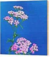 Pink Yarrow Wood Print