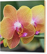 Pink Yellow Orchid Wood Print