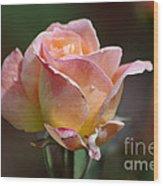 Pink Yellow Rose 01 Wood Print