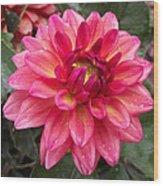 Pink Zinnia Flower Wood Print