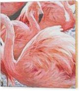 Pinked Flamingos Wood Print