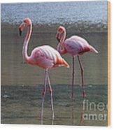 Pinkest Flamingo Wood Print