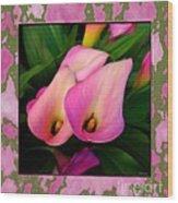 Pinkish Calla Lily Blooms Wood Print
