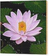 Pinkish Lotus Flower Wood Print