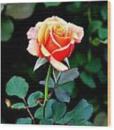 Pinkish Peach  Wood Print