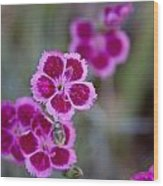 Pinks Wood Print