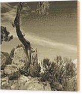 Pinon Pine Wood Print
