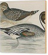 Pintail Duck Wood Print