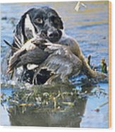 Pintail Retrieve Wood Print