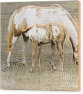 Pinto Mare And Filly Wood Print