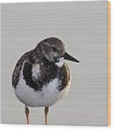 Ruddy Turnstone Wood Print