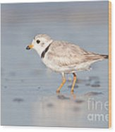 Piping Plover II Wood Print