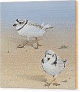 Piping Plovers Wood Print