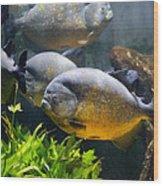Piranha Wood Print
