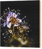 Anthers Wood Print