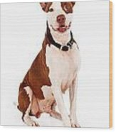 Pit Bull Dog With Happy Expression Wood Print