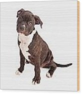 Pit Bull Puppy Black And White Wood Print
