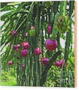 Pitaya Fruit Trees Wood Print