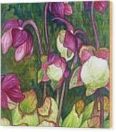 Pitcher Plant Flowers Wood Print
