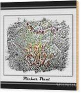 Pitcher Plant Illustration Wood Print