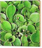Pitcher Plants Palm Springs Wood Print