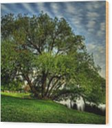 Pithers Willow Wood Print