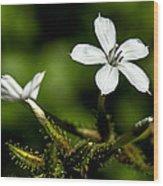 Pixie Flower Wood Print
