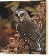 Pixie Saw Whet Owl Watching You Wood Print