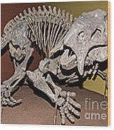 Placerias Fossil Wood Print