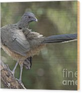 Plain Chachalaca Wood Print
