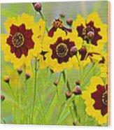 Plains Coreopsis Wood Print
