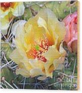Plains Prickly Pear Flower Wood Print