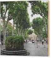 Plane Alley - Aix En Provence Wood Print