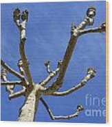 Plane Tree Wood Print