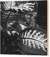 Plant 8658 Wood Print