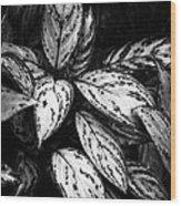 Plant 8659 Wood Print