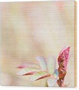 Plant Frills Wood Print