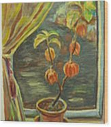 Plant In A Window Wood Print by Ellen Howell
