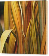 Plant In Yellow And Green Wood Print