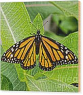 Plant Milkweed And Save The Monarch Butterfly Wood Print